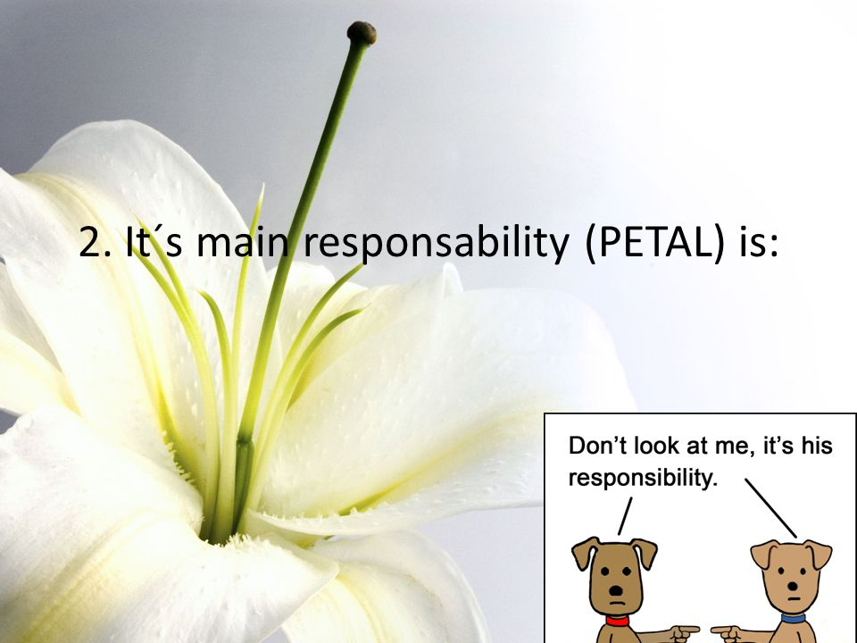 2. It´s main responsability (PETAL) is: