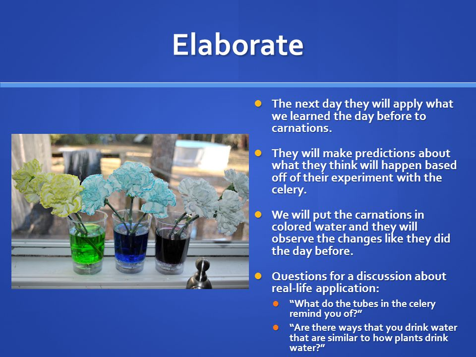 Elaborate The next day they will apply what we learned the day before to carnations.