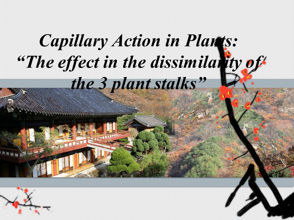 Capillary Action in Plants: The effect in the dissimilarity of the 3 plant stalks