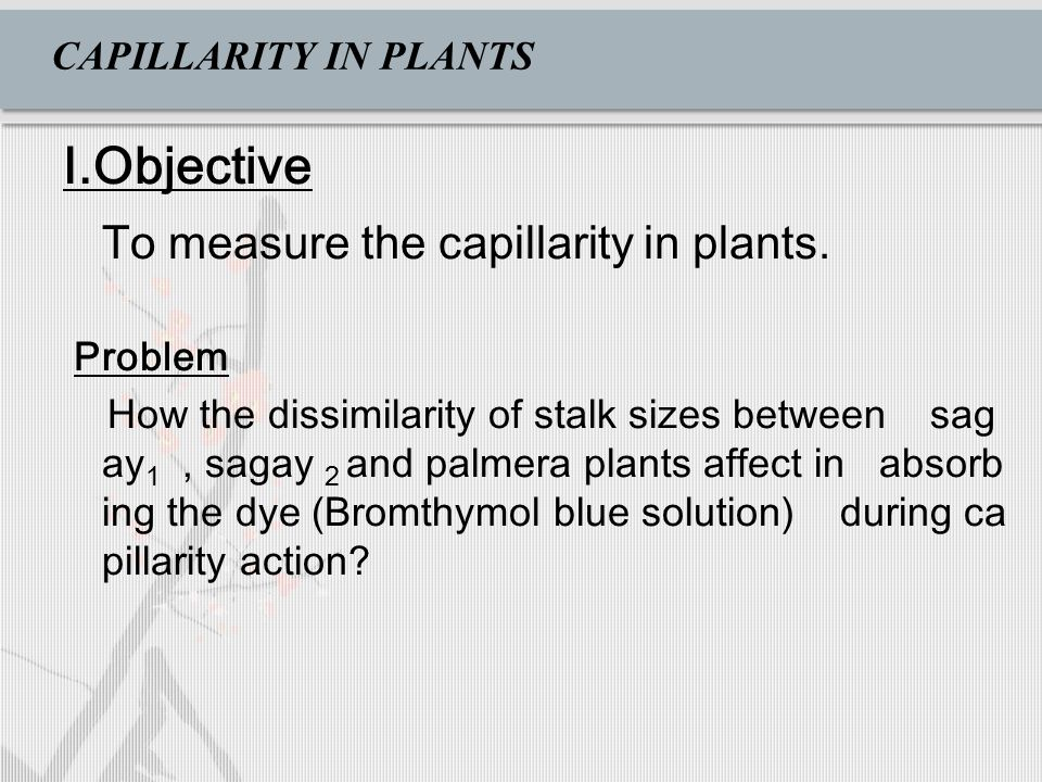 CAPILLARITY IN PLANTS I.Objective To measure the capillarity in plants.