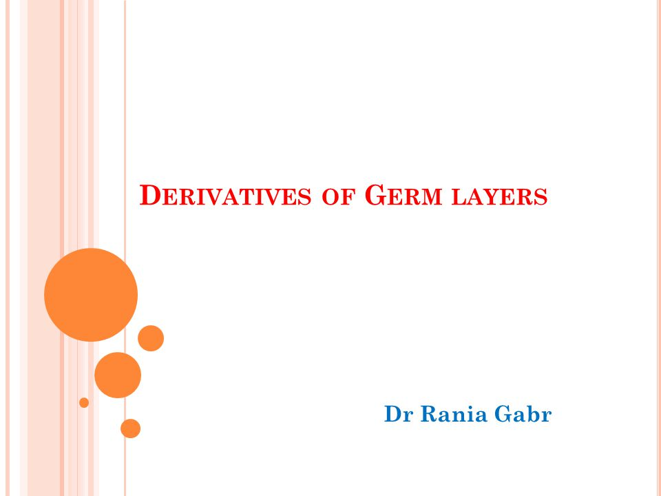 D ERIVATIVES OF G ERM LAYERS Dr Rania Gabr