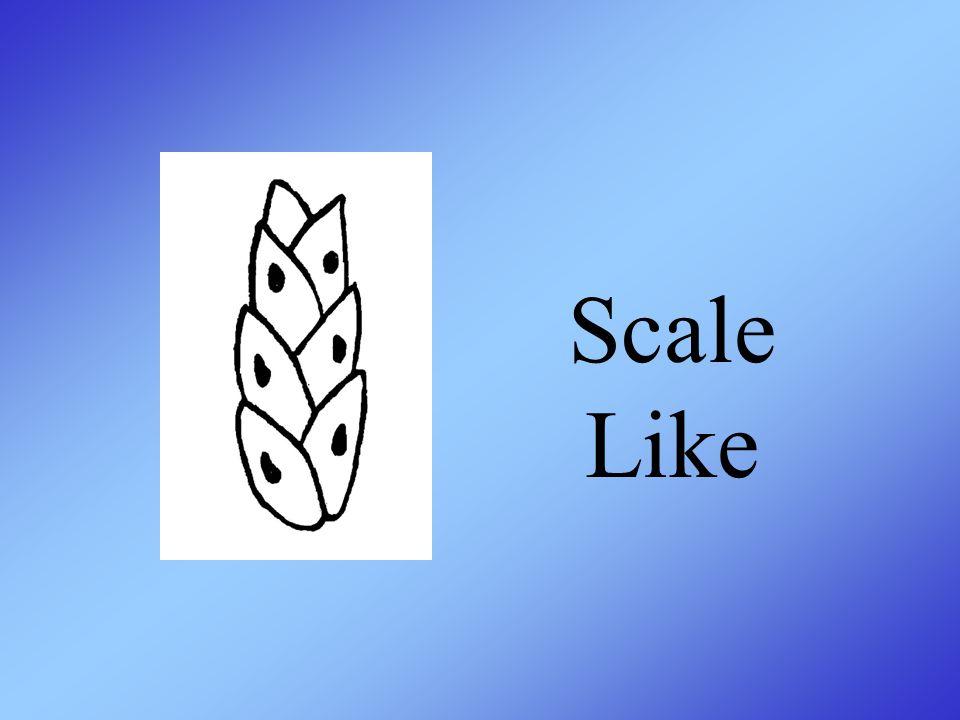 Scale Like