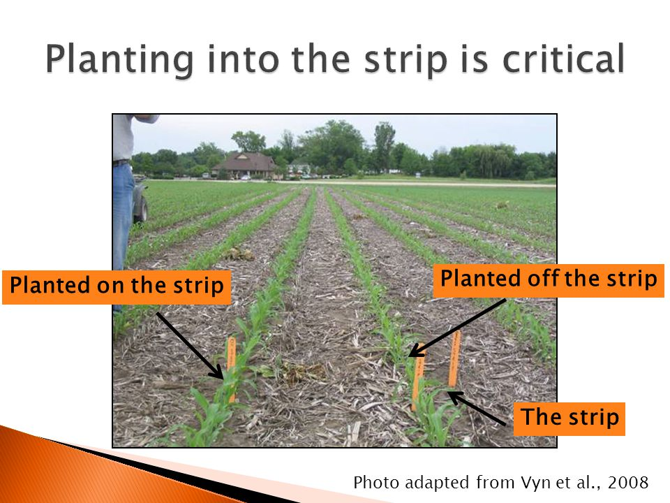 Photo adapted from Vyn et al., 2008 Planted on the strip Planted off the strip The strip