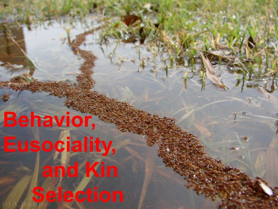 Behavior, Eusociality, and Kin Selection