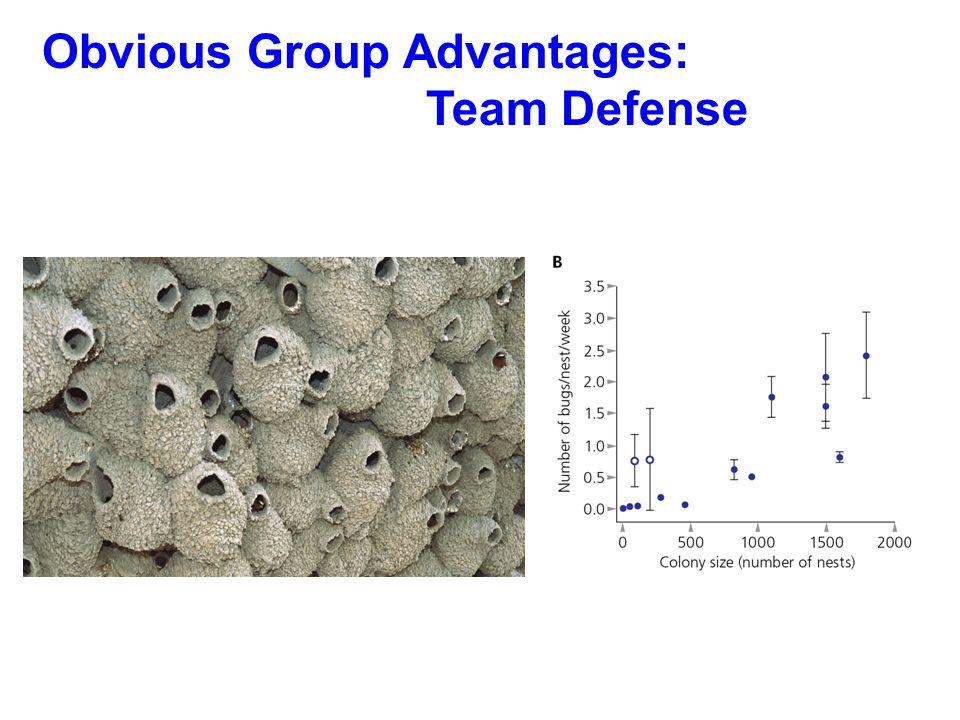 Obvious Group Advantages: Team Defense