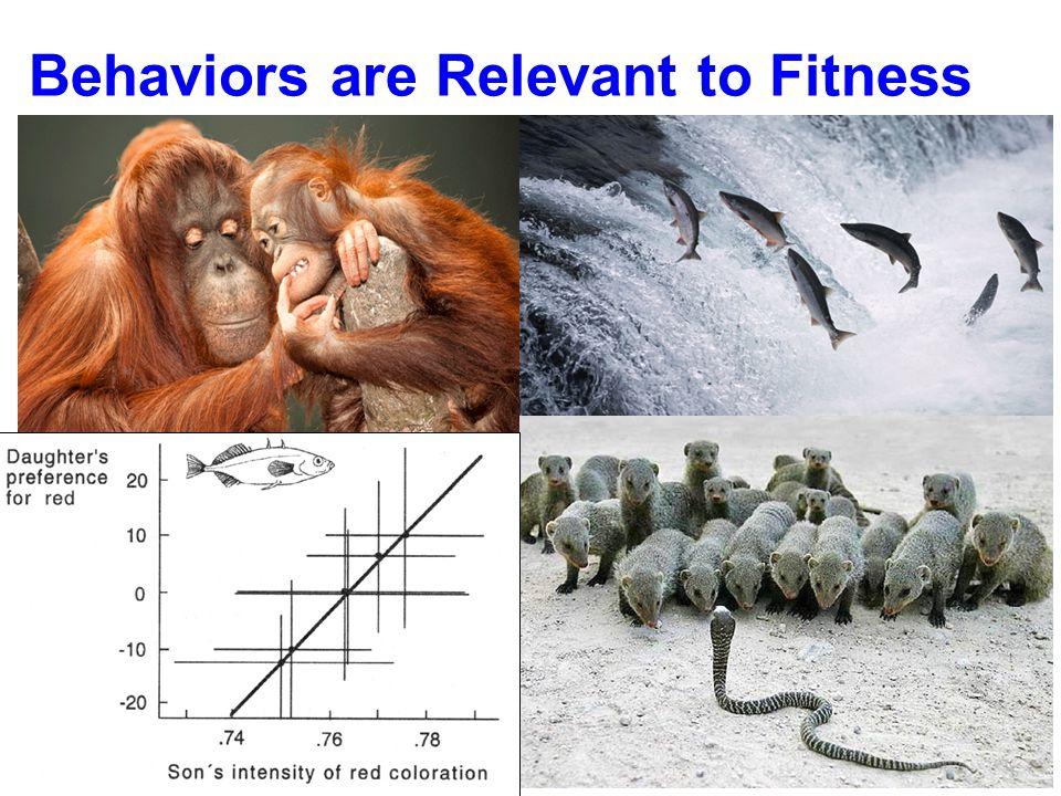 Behaviors are Relevant to Fitness