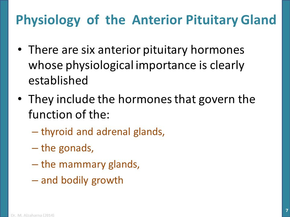 Dr. M. Alzaharna (2014) Physiology of the Anterior Pituitary Gland There are six anterior pituitary hormones whose physiological importance is clearly