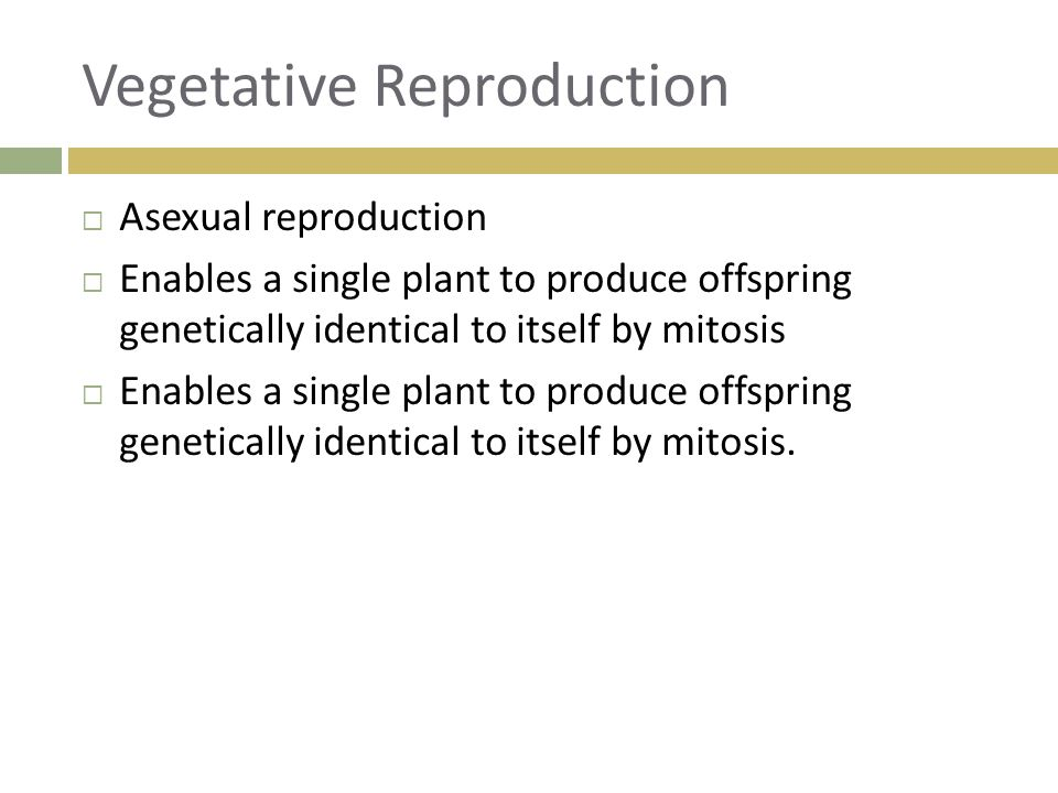 Vegetative Reproduction  Asexual reproduction  Enables a single plant to produce offspring genetically identical to itself by mitosis  Enables a si