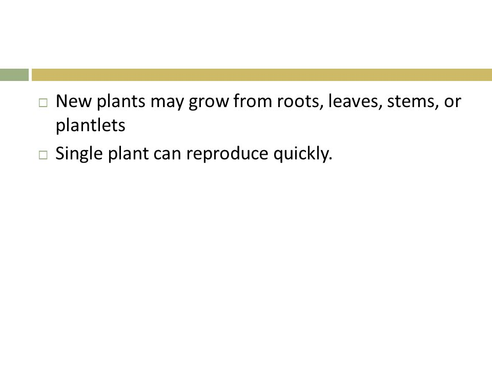  New plants may grow from roots, leaves, stems, or plantlets  Single plant can reproduce quickly.