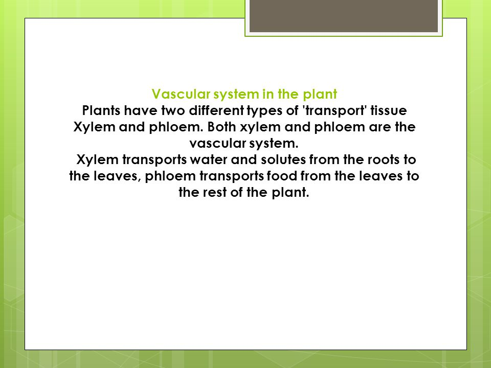 Vascular system in the plant Plants have two different types of 'transport' tissue Xylem and phloem. Both xylem and phloem are the vascular system. Xy