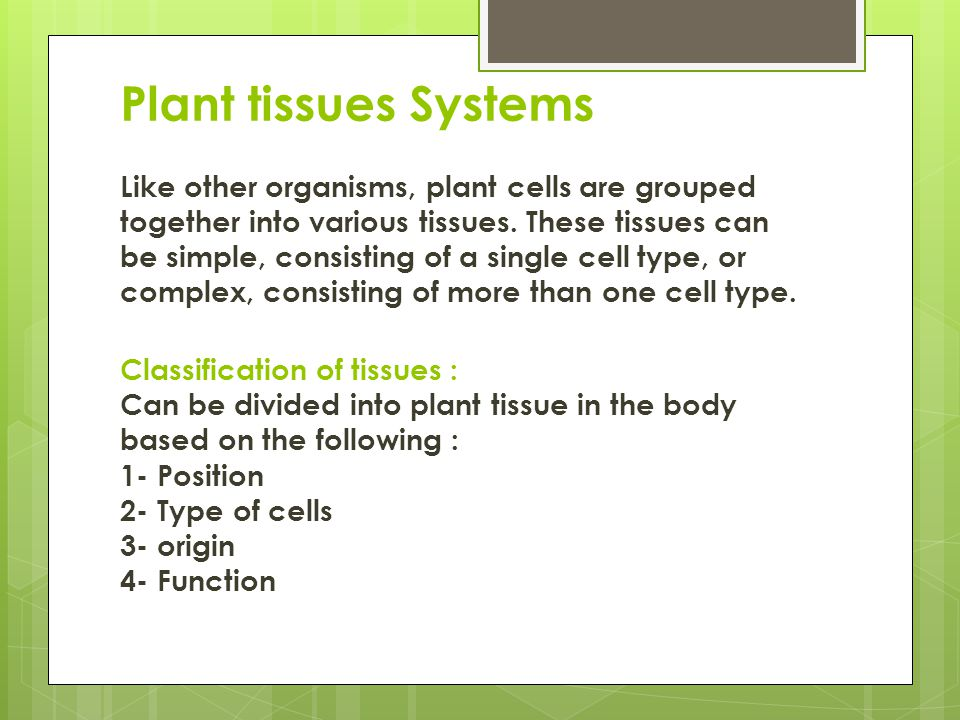 5- Phloem Phloem is the food conducting tissue which is formed of four elements; sieve elements, companion cells, parenchyma and fibres.