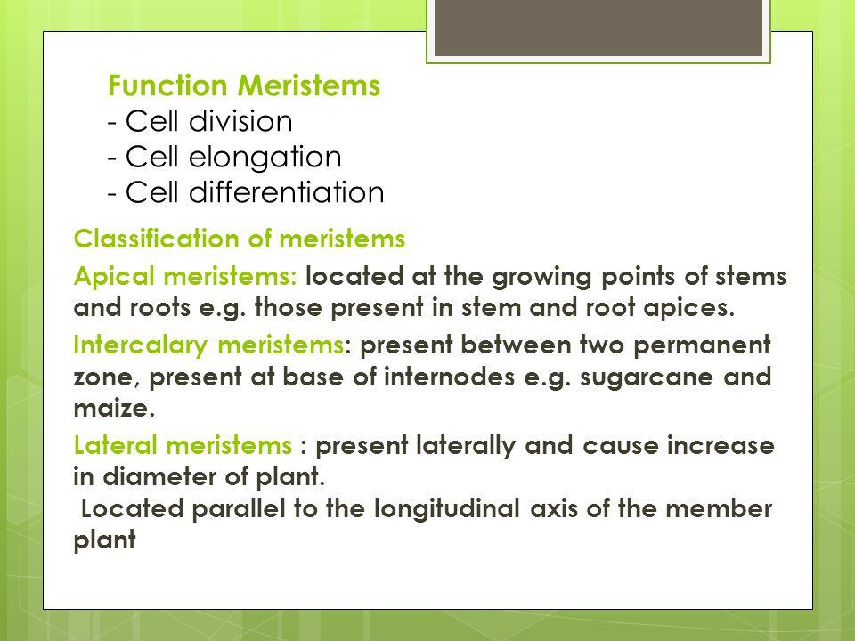 Classification of meristems Lateral meristems Intercalary meristems Apical meristems