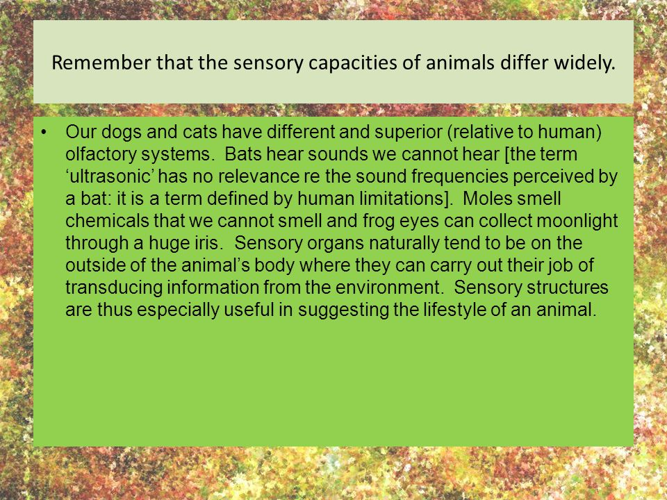 Remember that the sensory capacities of animals differ widely. Our dogs and cats have different and superior (relative to human) olfactory systems. Ba