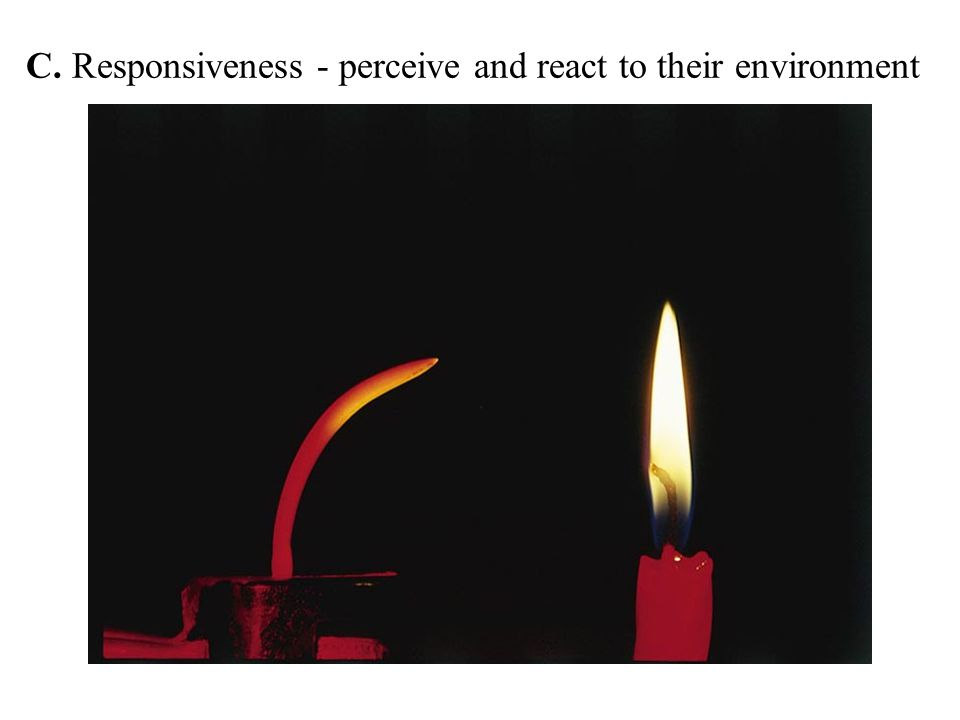 C. Responsiveness - perceive and react to their environment