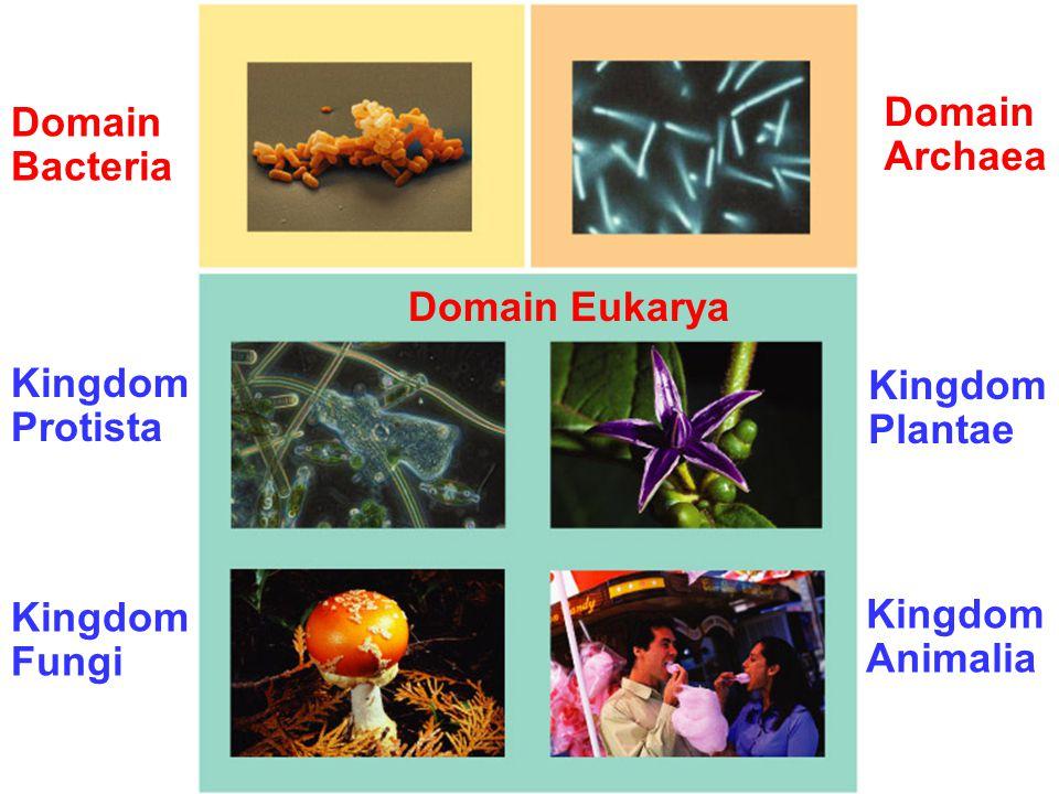 Domain Bacteria Domain Archaea Kingdom Protista Kingdom Plantae Kingdom Fungi Kingdom Animalia Domain Eukarya
