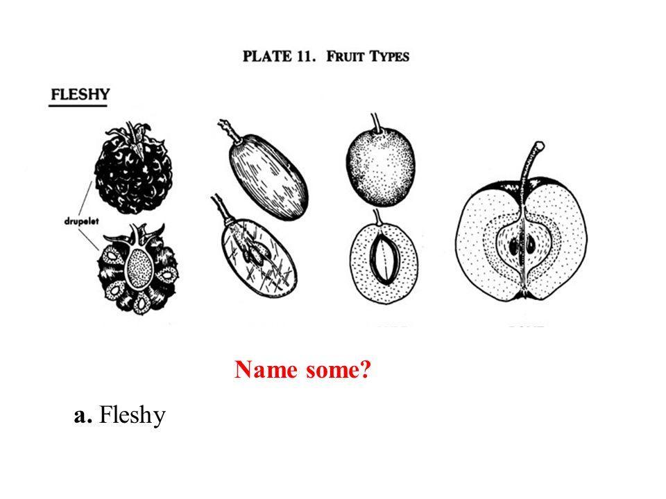 Name some a. Fleshy