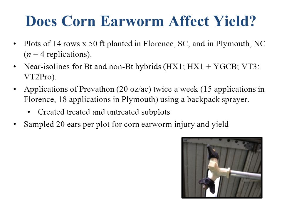 Does Corn Earworm Affect Yield.