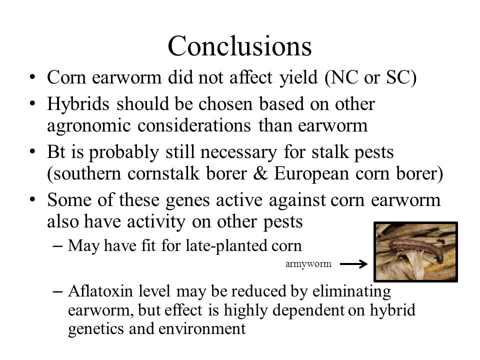 Conclusions Corn earworm did not affect yield (NC or SC) Hybrids should be chosen based on other agronomic considerations than earworm Bt is probably still necessary for stalk pests (southern cornstalk borer & European corn borer) Some of these genes active against corn earworm also have activity on other pests – May have fit for late-planted corn – Aflatoxin level may be reduced by eliminating earworm, but effect is highly dependent on hybrid genetics and environment armyworm