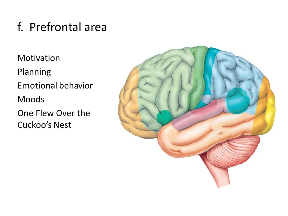 f. Prefrontal area Motivation Planning Emotional behavior Moods One Flew Over the Cuckoo's Nest
