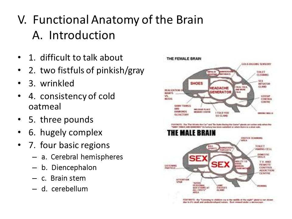 V. Functional Anatomy of the Brain A. Introduction 1. difficult to talk about 2. two fistfuls of pinkish/gray 3. wrinkled 4. consistency of cold oatme