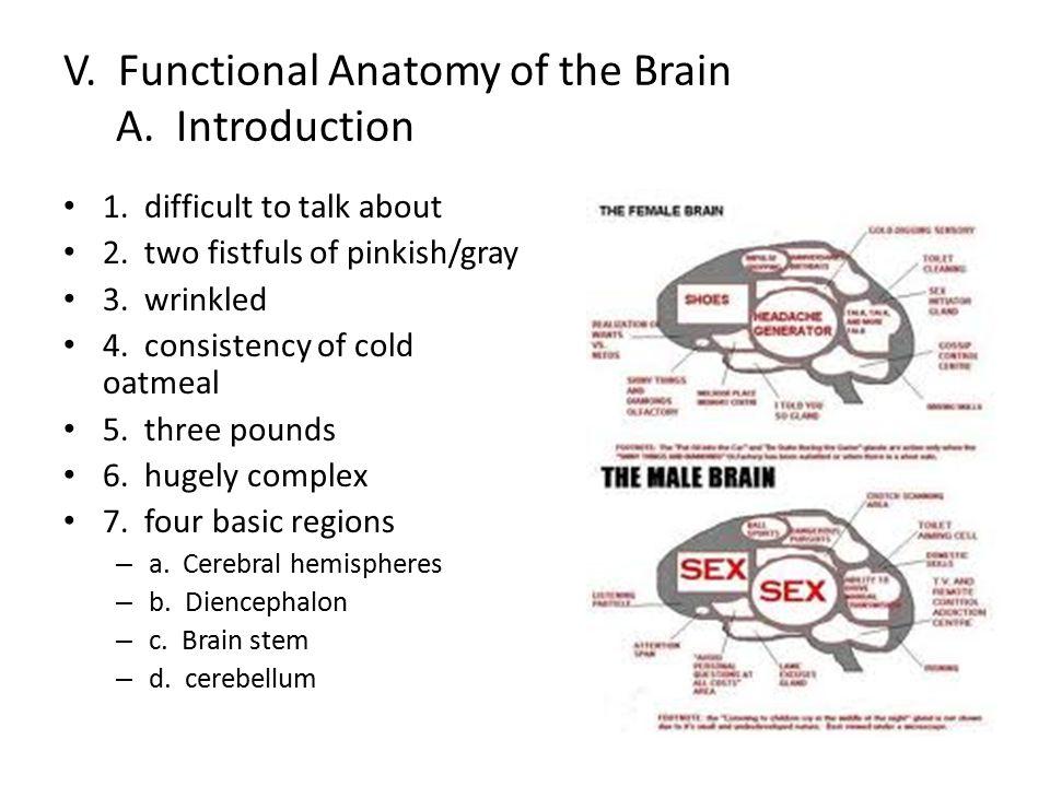 B.Cerebral hemispheres 1. most important part 2. overshadows diencephalon and brain stem 3.