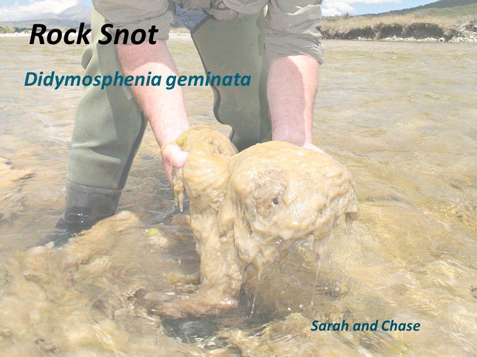 Didymosphenia geminata Rock Snot Sarah and Chase