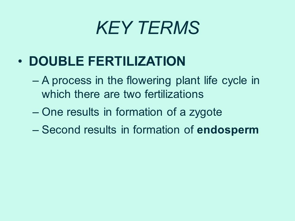 KEY TERMS DOUBLE FERTILIZATION –A process in the flowering plant life cycle in which there are two fertilizations –One results in formation of a zygot