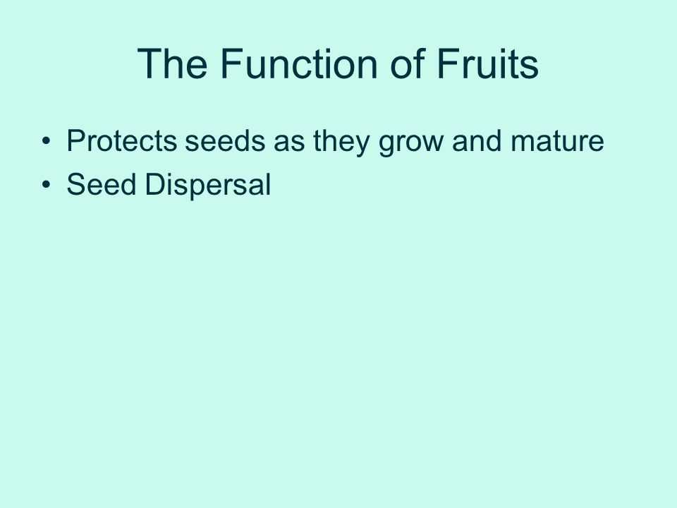 The Function of Fruits Protects seeds as they grow and mature Seed Dispersal