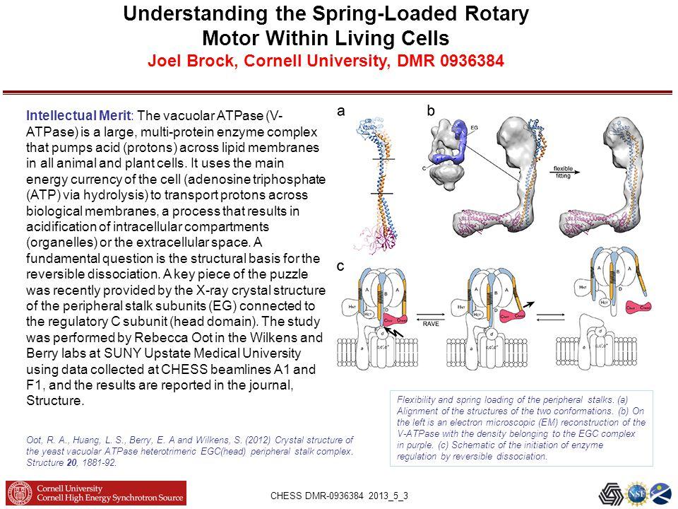 CHESS DMR-0936384 2013_5_3 Understanding the Spring-Loaded Rotary Motor Within Living Cells Joel Brock, Cornell University, DMR 0936384 Oot, R.