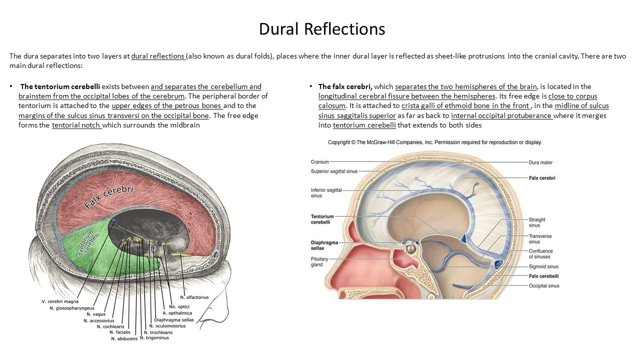 The sellar diaphragm is the smallest dural infolding and is a circular sheet of dura that is suspended between the clinoid processes, forming a partial roof over the hypophysial fossa.