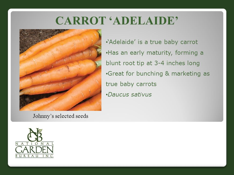 CARROT 'ADELAIDE' Johnny's selected seeds 'Adelaide' is a true baby carrot Has an early maturity, forming a blunt root tip at 3-4 inches long Great for bunching & marketing as true baby carrots Daucus sativus
