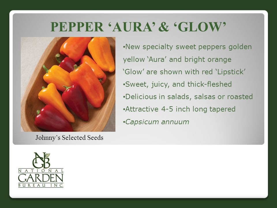 PEPPER 'AURA' & 'GLOW' Johnny's Selected Seeds New specialty sweet peppers golden yellow 'Aura' and bright orange 'Glow' are shown with red 'Lipstick' Sweet, juicy, and thick-fleshed Delicious in salads, salsas or roasted Attractive 4-5 inch long tapered Capsicum annuum