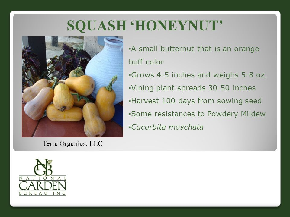 SQUASH 'HONEYNUT' Terra Organics, LLC A small butternut that is an orange buff color Grows 4-5 inches and weighs 5-8 oz.