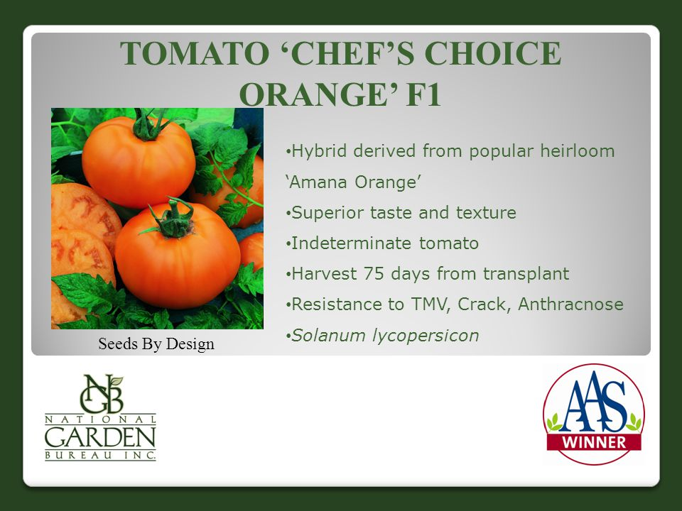 TOMATO 'CHEF'S CHOICE ORANGE' F1 Seeds By Design Hybrid derived from popular heirloom 'Amana Orange' Superior taste and texture Indeterminate tomato Harvest 75 days from transplant Resistance to TMV, Crack, Anthracnose Solanum lycopersicon