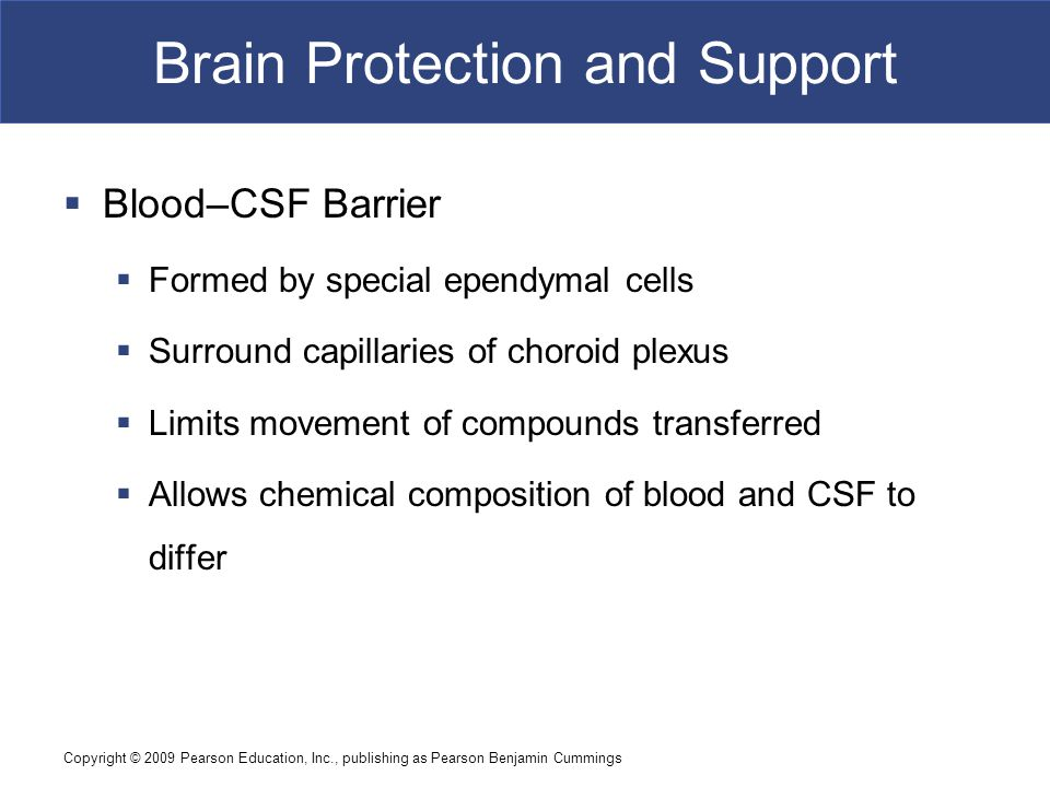 Copyright © 2009 Pearson Education, Inc., publishing as Pearson Benjamin Cummings Brain Protection and Support  Blood–CSF Barrier  Formed by special ependymal cells  Surround capillaries of choroid plexus  Limits movement of compounds transferred  Allows chemical composition of blood and CSF to differ
