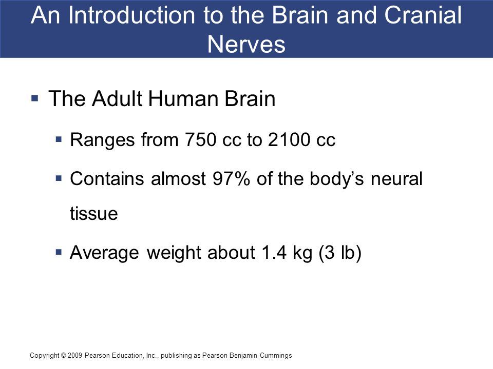 Copyright © 2009 Pearson Education, Inc., publishing as Pearson Benjamin Cummings An Introduction to the Brain and Cranial Nerves  The Adult Human Brain  Ranges from 750 cc to 2100 cc  Contains almost 97% of the body's neural tissue  Average weight about 1.4 kg (3 lb)