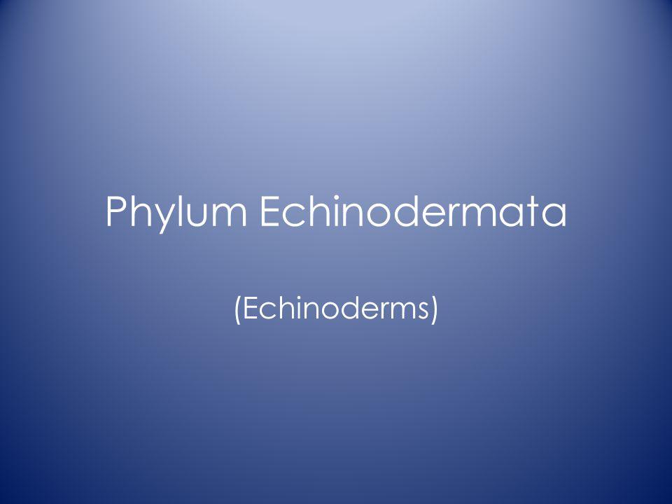 Phylum Echinodermata (Echinoderms)