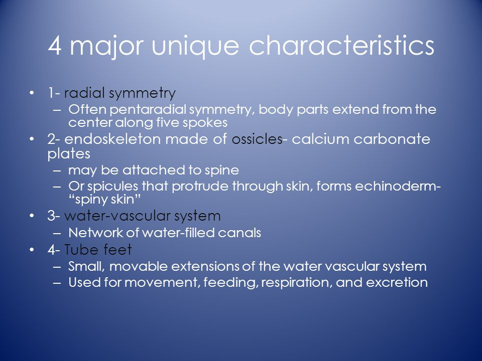 4 major unique characteristics 1- radial symmetry – Often pentaradial symmetry, body parts extend from the center along five spokes 2- endoskeleton made of ossicles- calcium carbonate plates – may be attached to spine – Or spicules that protrude through skin, forms echinoderm- spiny skin 3- water-vascular system – Network of water-filled canals 4- Tube feet – Small, movable extensions of the water vascular system – Used for movement, feeding, respiration, and excretion
