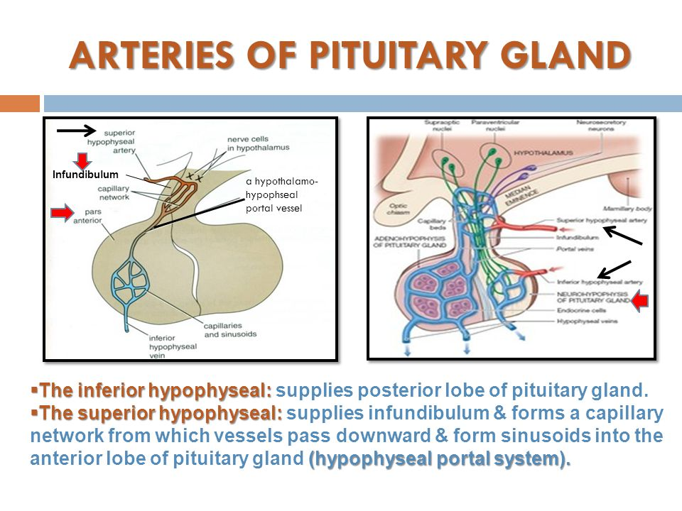ARTERIES OF PITUITARY GLAND  The inferior hypophyseal:  The inferior hypophyseal: supplies posterior lobe of pituitary gland.  The superior hypophy