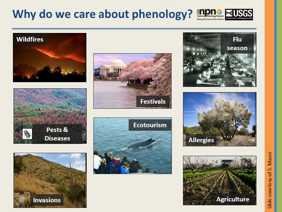Invasions Allergies Pests & Diseases Wildfires Flu season Agriculture Festivals Ecotourism Slide courtesy of S.