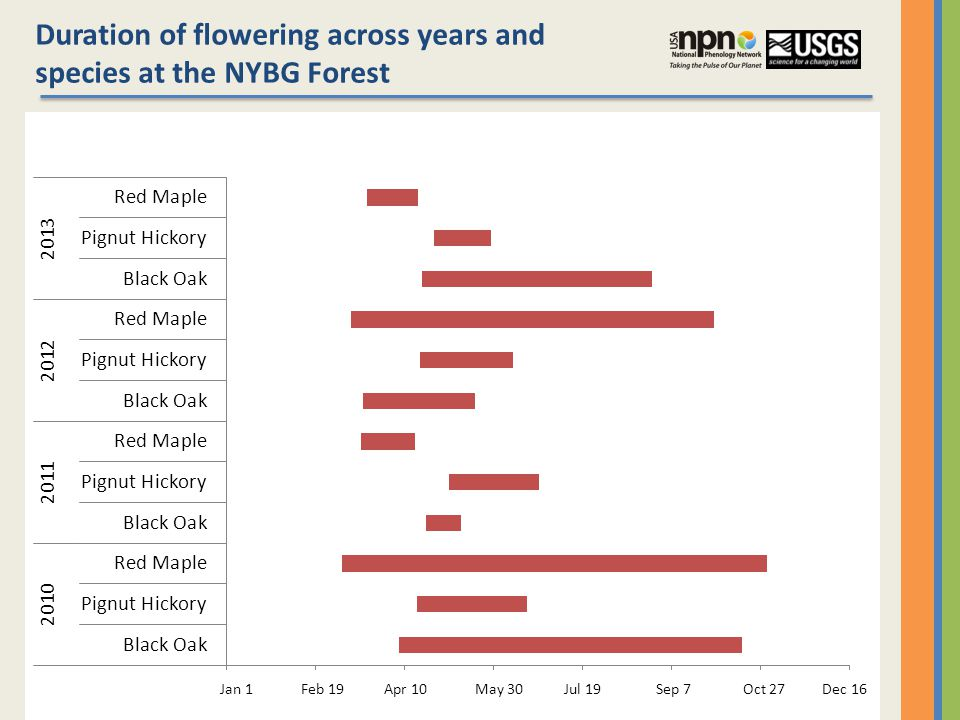 Duration of flowering across years and species at the NYBG Forest Jan 1 Feb 19 Apr 10 May 30 Jul 19 Sep 7 Oct 27 Dec 16