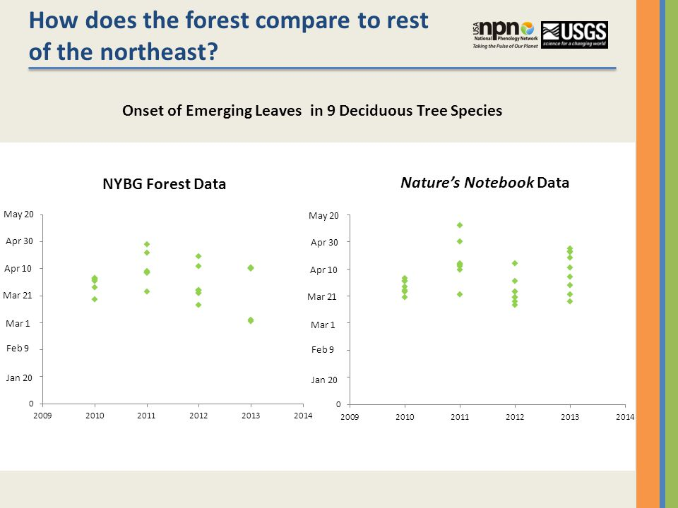 How does the forest compare to rest of the northeast.