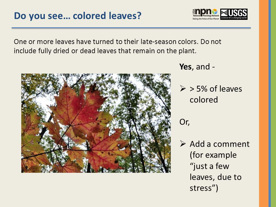 Do you see… colored leaves.