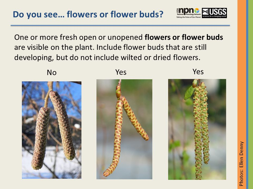 Do you see… flowers or flower buds.