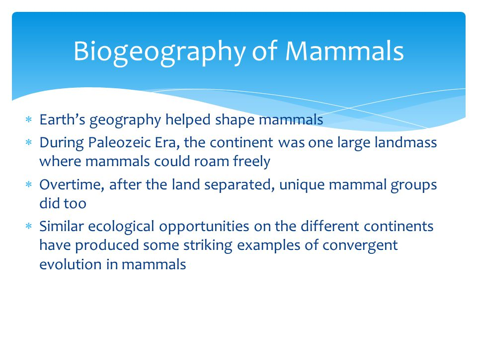  Q: About how many species of mammals are their.