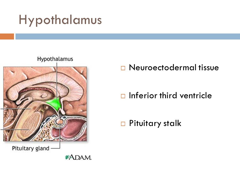 Hypothalamus  Neuroectodermal tissue  Inferior third ventricle  Pituitary stalk