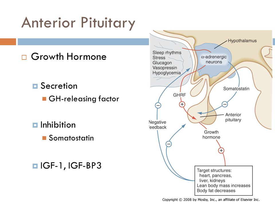 Anterior Pituitary  Growth Hormone  Secretion GH-releasing factor  Inhibition Somatostatin  IGF-1, IGF-BP3