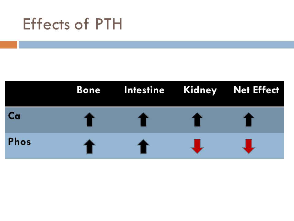 Effects of PTH BoneIntestineKidneyNet Effect Ca Phos