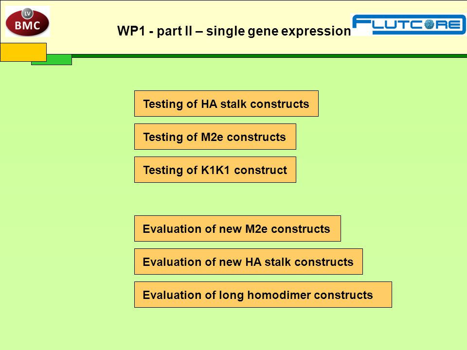 Testing of HA stalk constructs Testing of M2e constructs Evaluation of long homodimer constructs Evaluation of new M2e constructs Testing of K1K1 construct Evaluation of new HA stalk constructs WP1 - part II – single gene expression