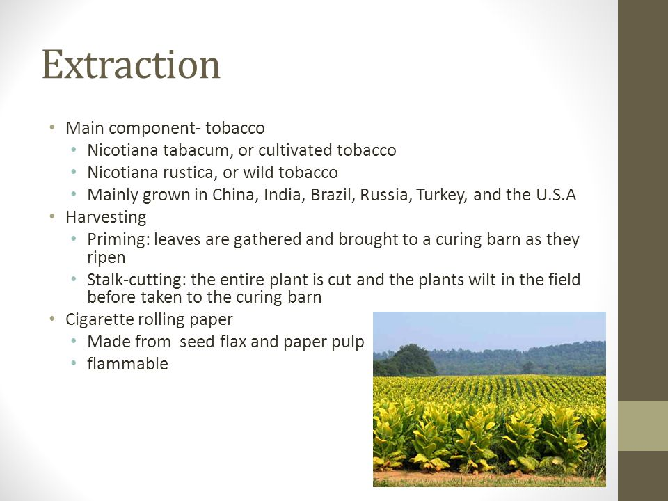 Extraction Main component- tobacco Nicotiana tabacum, or cultivated tobacco Nicotiana rustica, or wild tobacco Mainly grown in China, India, Brazil, R